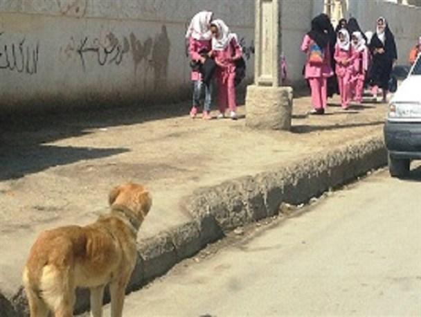 سگهای ولگرد، ترس این روزهای کودکان بازیگوش/ فاطمه قربانی پروسه ادامه دار ساماندهی موجودات درنده