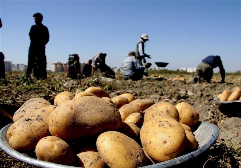 همدان، قطب سیب زمینی کشوردر حسرت صنایع تبدیلی