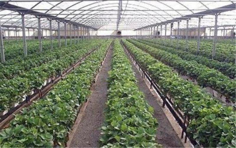 تنها گلخانه هیدرویونیک استان همدان در نهاوند احداث میشود