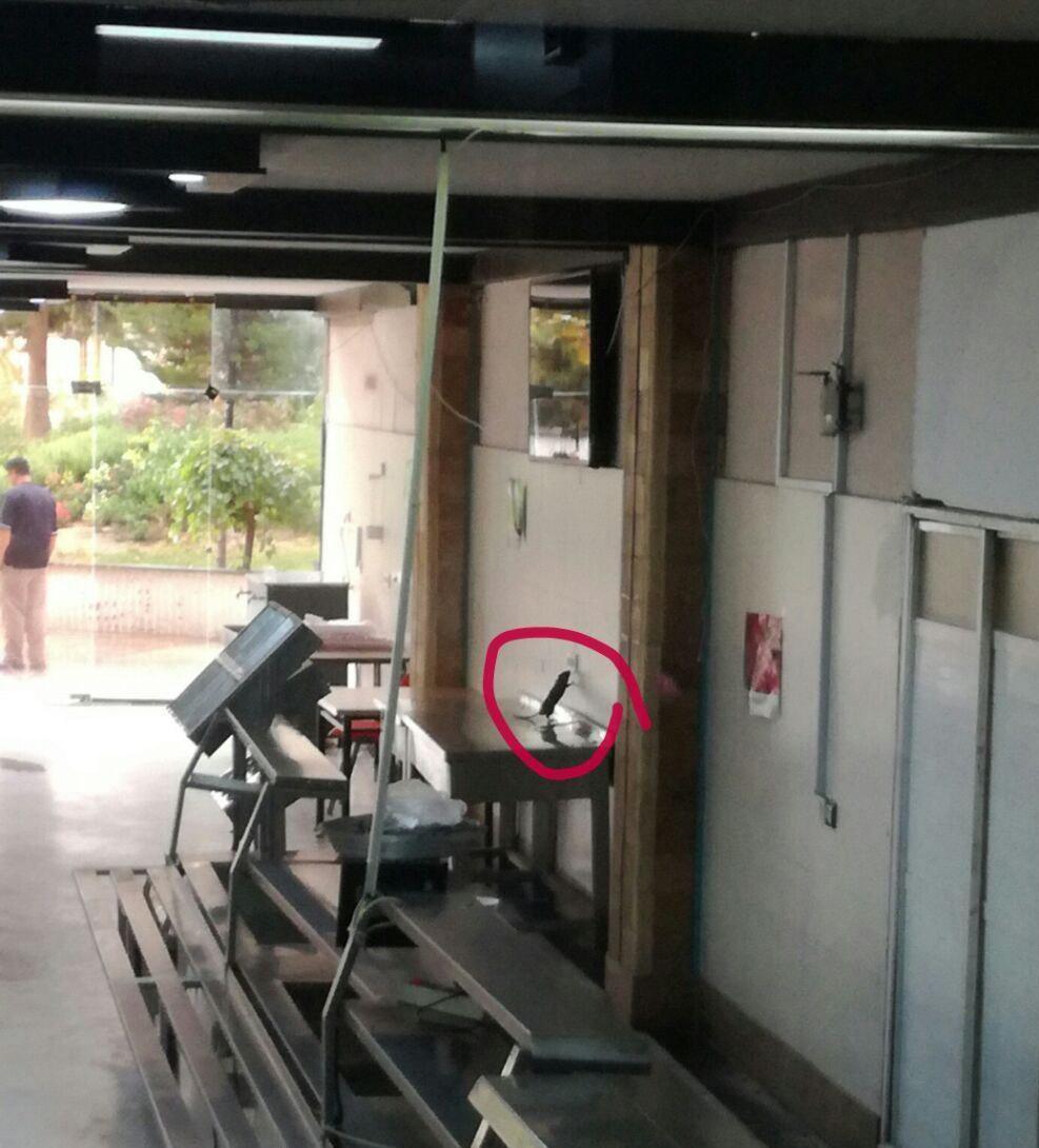 ماجرای وجود موش در سلف دانشگاه خواجه نصیر چه بود؟