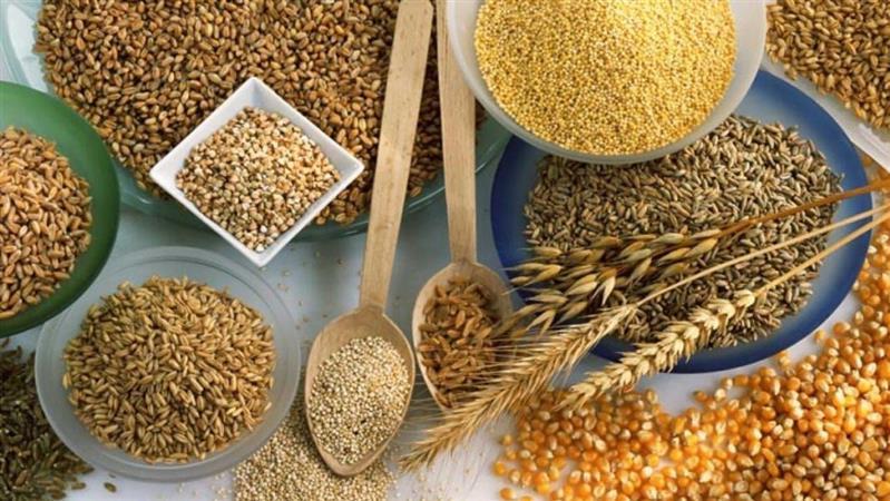 روابط عمومی/توزیع ۵۹۰ هزار تن بذور اصلاح شده گندم و جو در بین کشاورزان