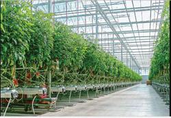 پرداخت وام کم بهره به علاقمندان احداث گلخانه