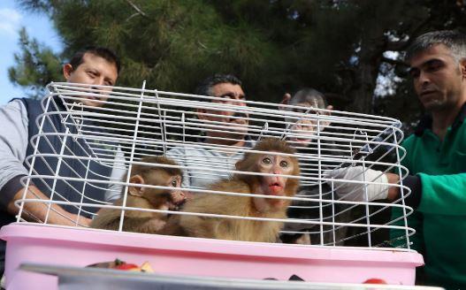 تصاویر روز: از سفر تیمی بانوان در صحرای بزرگ آفریقا تا پیدا شدن دو میمونی که از باغوحشی در ترکیه ربوده شده بود