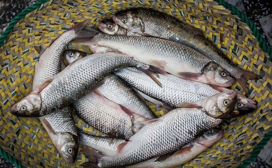 اختلاف ۱۵۰ درصدی قیمت ماهی از مزرعه تا بازار/افزایش قیمت ماهی در راه است