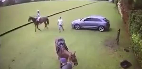 بیهوشی یک مرد از جفتک ناگهانی اسب + فیلم