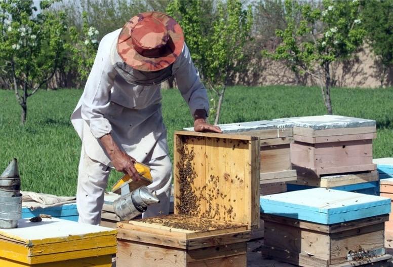 بیش از یک هزار تن عسل در استان ایلام برداشت شد