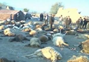 تلف شدن صدها دام در شهرستانهای میانه و سراب