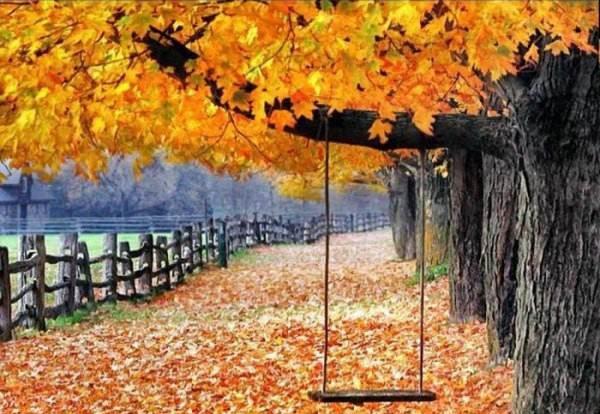 چگونه از زیباییهای فصل پاییز عکس بگیریم؟