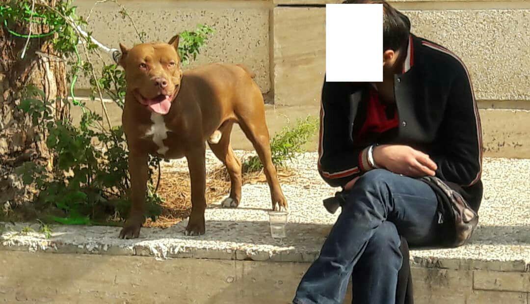 جزئیات حادثه حمله سگ رها شده به دو شهروند در دزاشیب