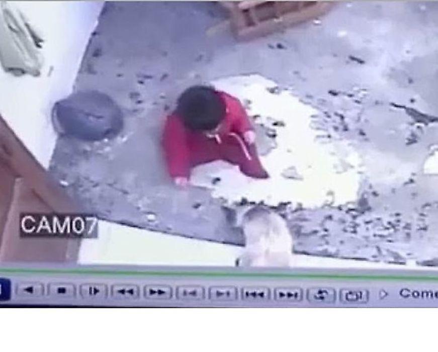 حس مادرانه گربهای که مانع سقوط نوزاد از پله شد+فیلم