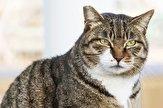 باشگاه خبرنگاران -حمله گربه به بیمارستان محلات