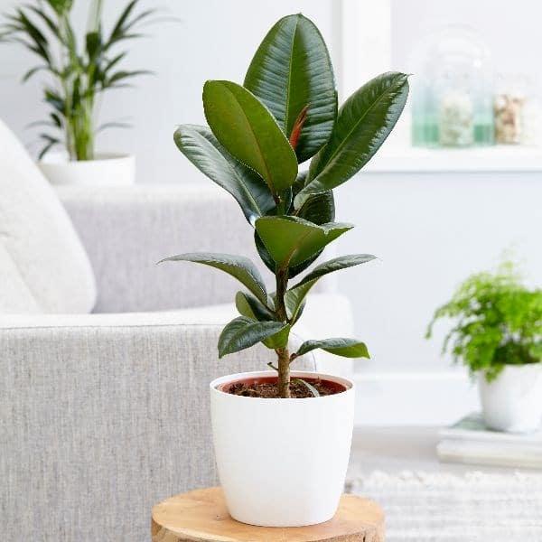 گیاهانی که عوارض آلودگی هوا را درون خانه ها کمتر می کنند