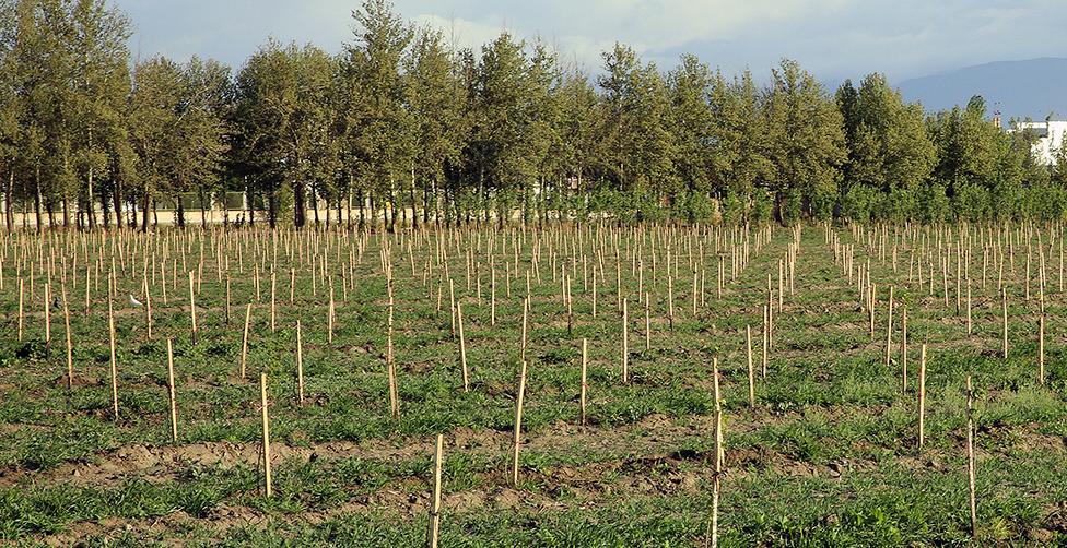 تبدیل مزرعه ثامن به قطب درآمدی موقوفات ملک