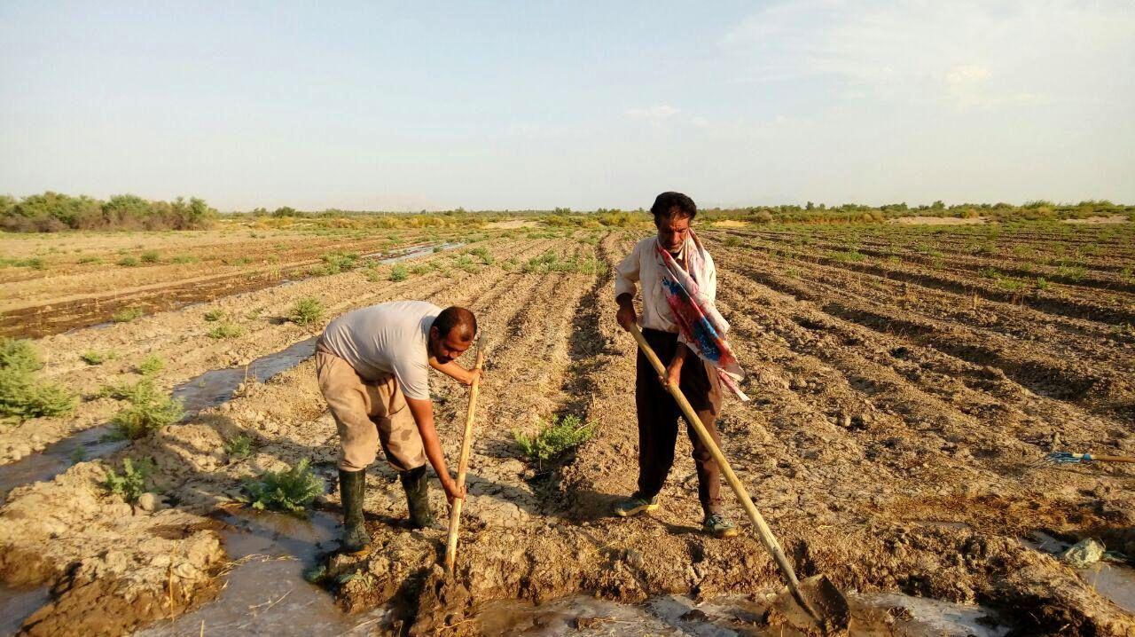 بیمه محصولات کشاورزی امنیت غذایی و شغلی کشاورزان را تضمین میکند