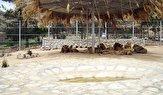 باشگاه خبرنگاران -زیستگاه طبیعی اولویت محیط زیست برای گونههای پارک پردیسان
