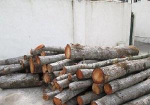 ۳۷ تن چوب قاچاق در ملایر کشف شد