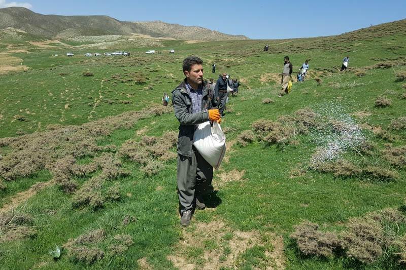 کودپاشی  ۱۰۰ هکتاری مراتع شهرستان اسدآباد