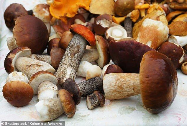 تاثیر برخی قارچها بر تقویت سیستم ایمنی بدن//ثباتی