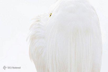 مسابقه عکاسی طبیعت وحشی ۲۰۱۹