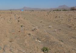 ۱۸ مورد رفع تصرف در یک روز کاری/۵ هزار و ۲۲۰ مترمربع از اراضی ملی آزاد شد