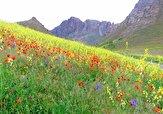 باشگاه خبرنگاران -فیلمی زیبا از گلهای وحشی در زاوه