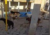 باشگاه خبرنگاران -گله سگهای ولگرد در سطح شهر «دندی» + فیلم