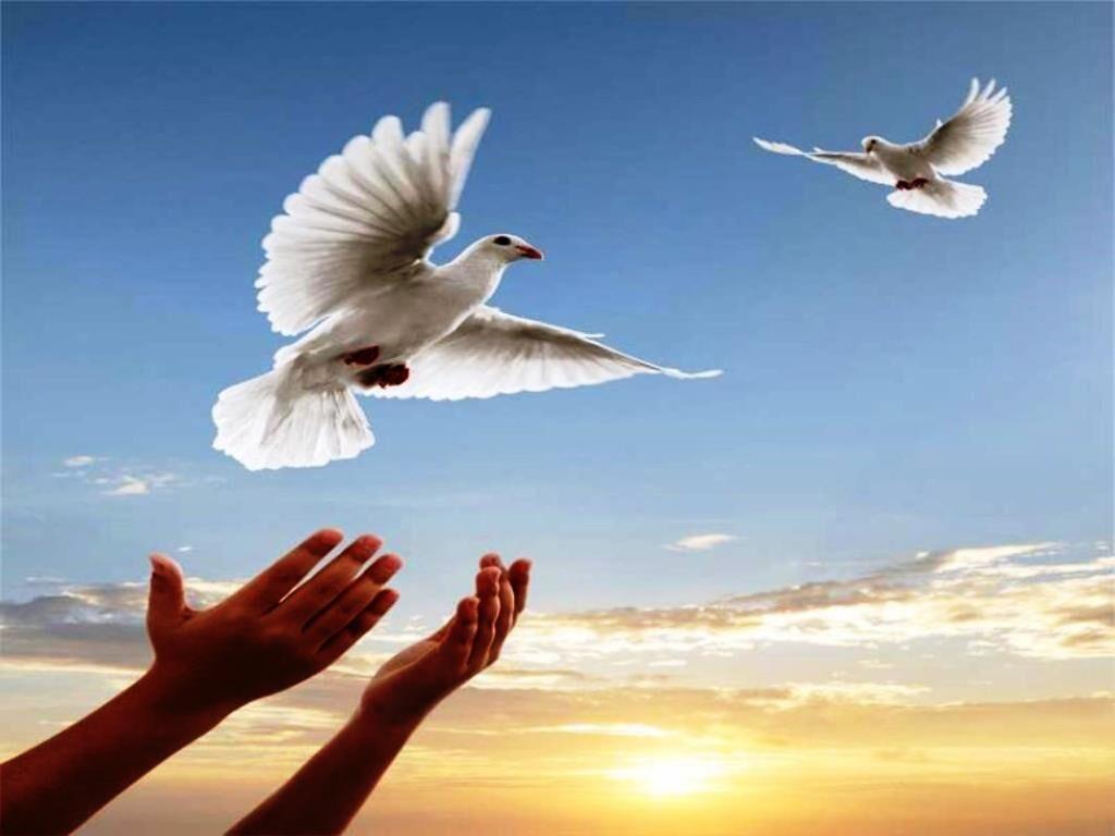 آزادی ۲۰ زندانی غیرعمد در همدان