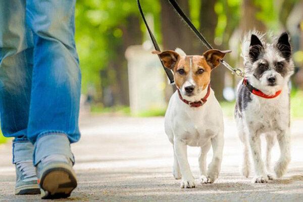 مجازات سنگین برای سگ گردانی در همدان
