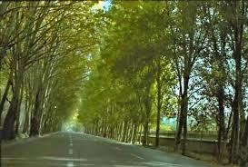 درختان مناسب کاشت متناسب با اقلیم خراسان رضوی