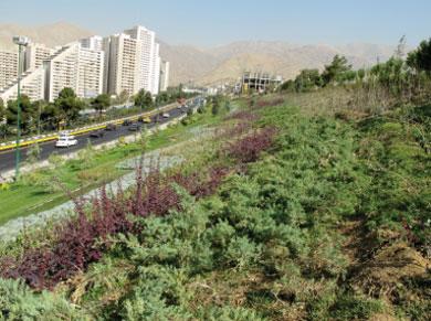 کاظمی/ فعلا بماند/تکمیل 1300 هکتار از کمربند سبز تهران تا 15 اسفند