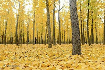 پاییز در جهان