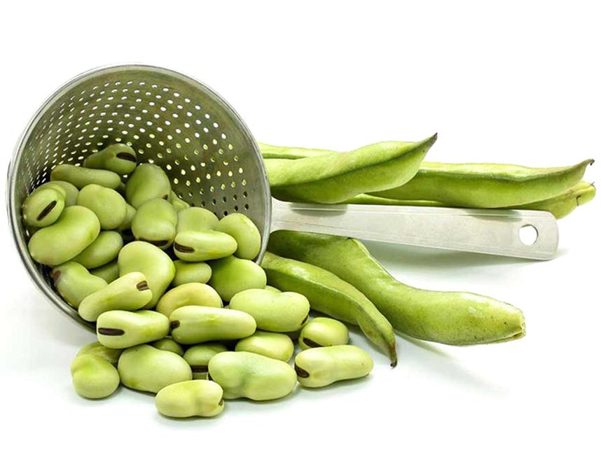 خواص ناشناخته گیاهی که سرشار از املاح معدنی است