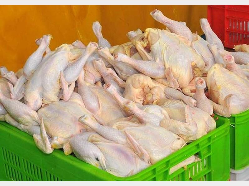 صدور مجوز واردات ۴۵ هزار تن مرغ