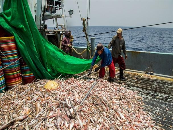 شکی در صید غیرمجاز ماهیان تجاری و صنعتی در آب های خلیج فارس و دریای خزر نیست/کشتی های چینی اقدام به صید غیرمجاز ماهیان تجاری می کنند/حضور کشتی های چینی در آب های دریای عمان اشتغال ساحل نشینان را به خطر انداخته است