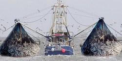تاختن خارجیها با صید غیر مجاز در آبهای خلیج فارس و دریای خزر! / اشتغال ساحلنشینان در خطر است