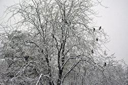 باشگاه خبرنگاران - اولین برف پاییزی در تهران