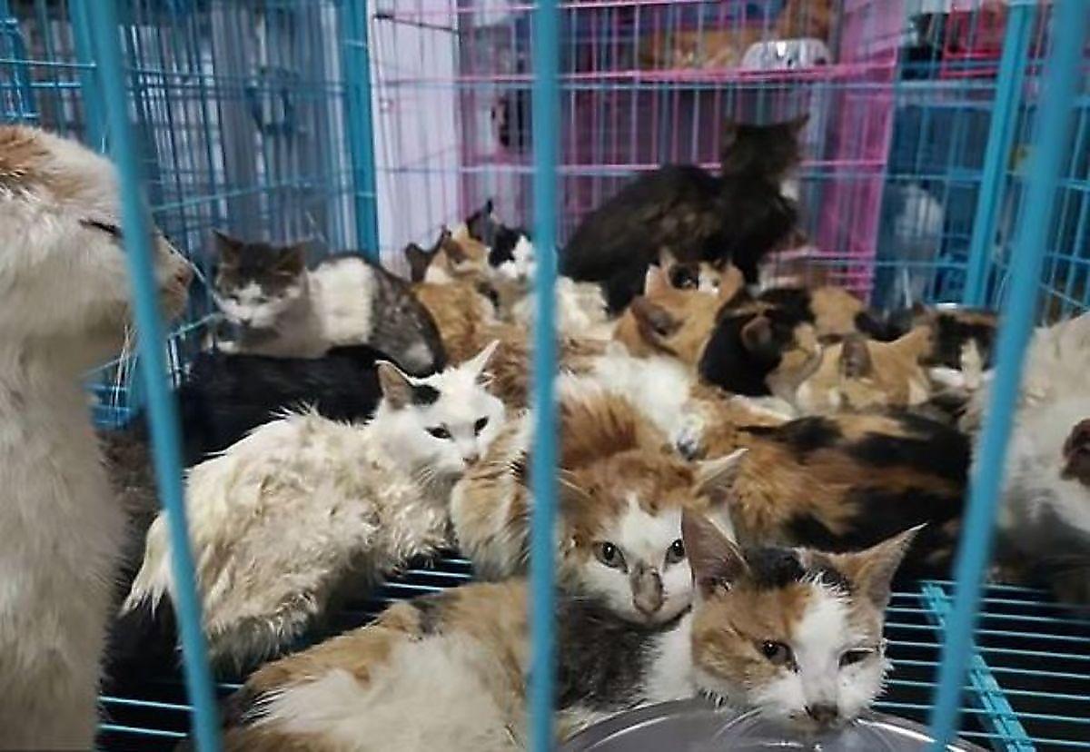 کشف صدها گربه ولگردی که قرار بود شامی لذیذ شوند+ فیلم