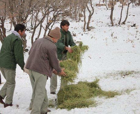 آغاز توزیع علوفه در مناطق کوهستانی برای حیات وحش