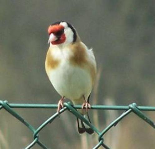 کشف محموله قاچاق پرندگان در آستارا