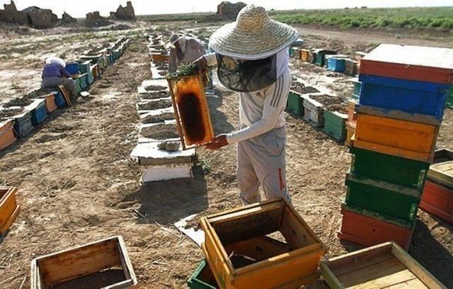 شمارش کلنیهای زنبورعسل در قیروکارزین