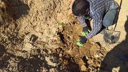 320 اصله نهال گل محمدی در روستای چسب واکاری شد