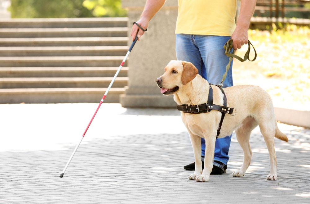 سگی که جان صاحب نابینای خود را نجات داد + فیلم