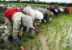 بیش از هشت هزار و ۵۰۰ شغل در بخش کشاورزی کرمانشاه ایجاد شد