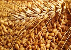 توزیع ۲۶ هزار تن بذر اصلاح شده در ایلام