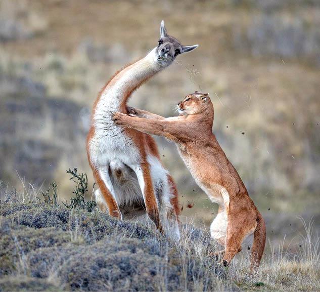 عکسهایی حیرتانگیز از حیاتوحش