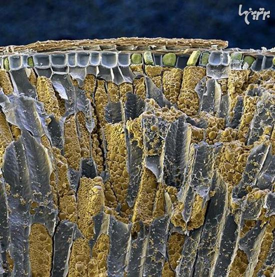 دنیا زیر میکروسکوپ چه شکلی است؟ + تصاویر
