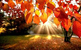 تغییر رنگ برگ درختان در فصل پاییز/علت علمی برگ ریزان در فصل پاییز