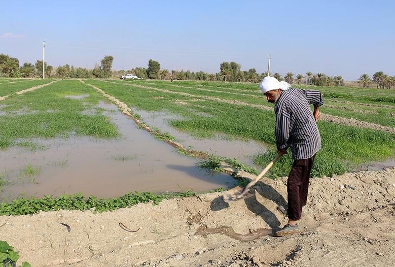 تاثیر مناسب بارندگی بر محصولات کشاورزی در ایلام