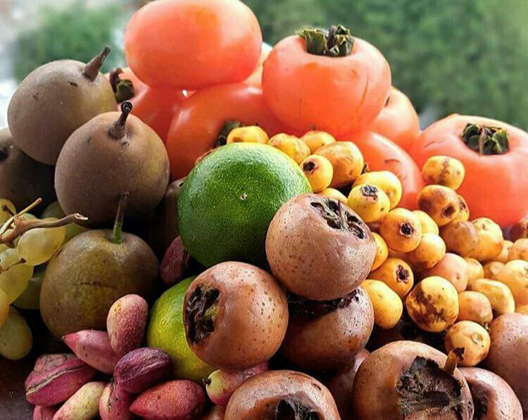 خواص ۹ میوه شگفتانگیز پاییزی +اینفوگرافی
