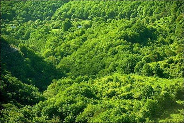 افزایش ۲۰۰ هکتاری جنگلهای شهرستان نهاوند